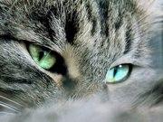 Ласковая кошка Тарася ищет своего человека!